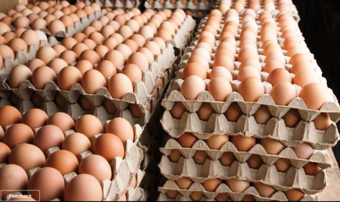 Beginner's Guide To Running A Profitable Poultry Business » Business